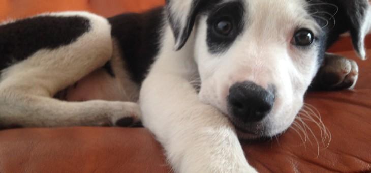Newton, un perfetto cane da ufficio