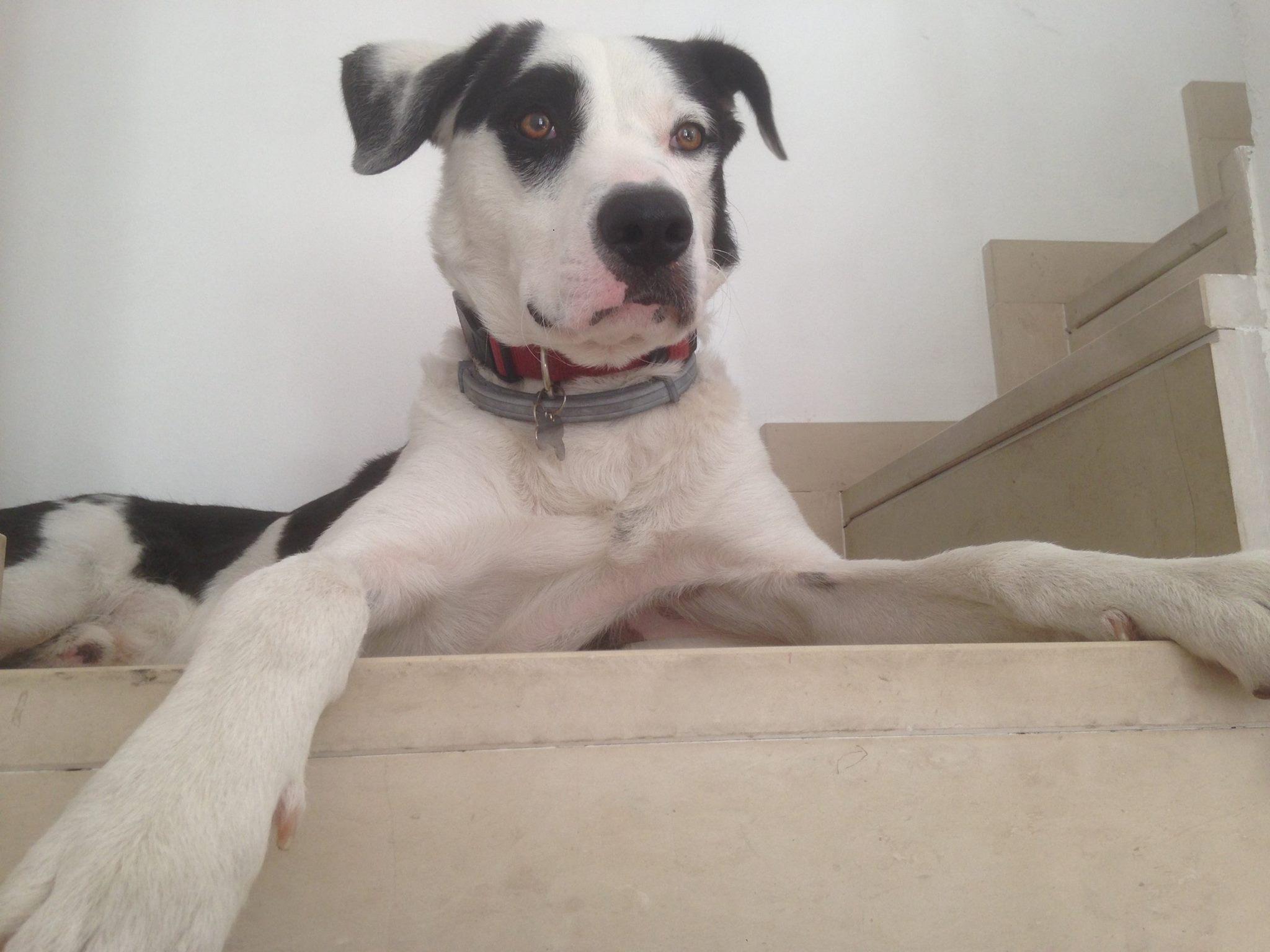 Karma Communication - Newton un cane con un occhio nero