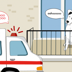 Karma Communication - Newton non cane da ufficio ma lupo karmiki